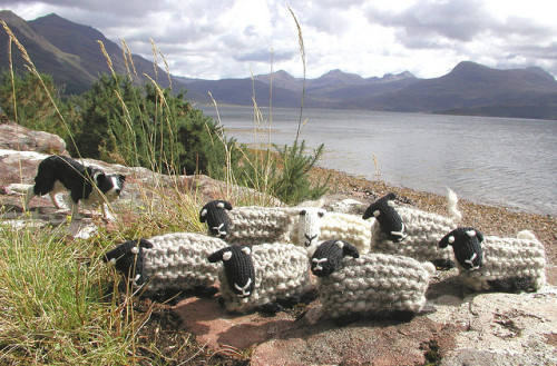 fluffylumpkins:  Sheep in the Scottish Highlands by Hand Knitted Things on Flickr.