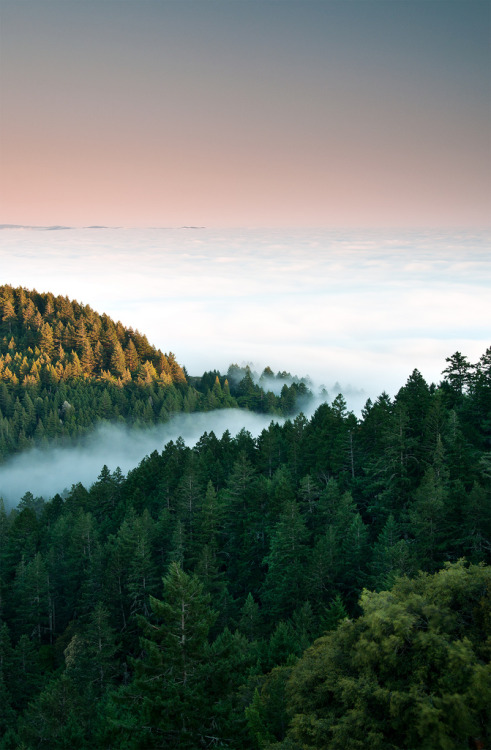 wandering-through-nature:  planetearths: California → Mount Tamalpais [by danielpivnick]