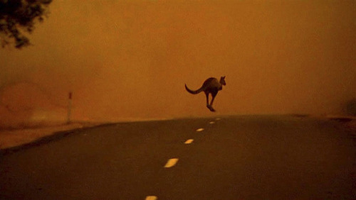 So, why did the kangaroo cross the road? (Oh, it was escaping a bushfire…)