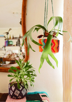 Awesome: Plant-a-colada: easy DIY planters from coconuts! | Justina Blakeney.