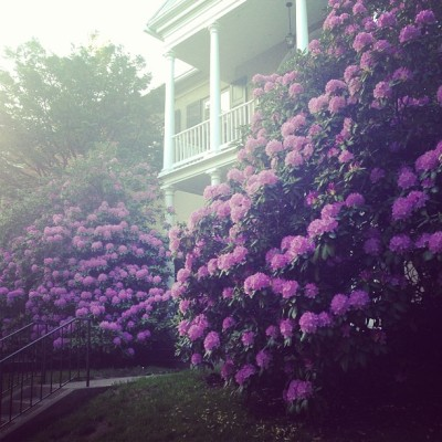 Beautiful things are blooming. #beautiful#purple#flowers#house#landscaping