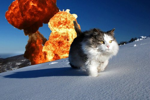 Cool cats don't look at explosions Die Hard: The Cat Chronicles