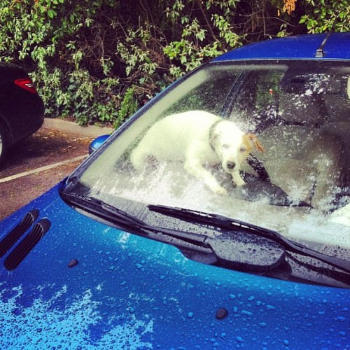 Don't even need a car alarm just install a small angry #dog on the dash