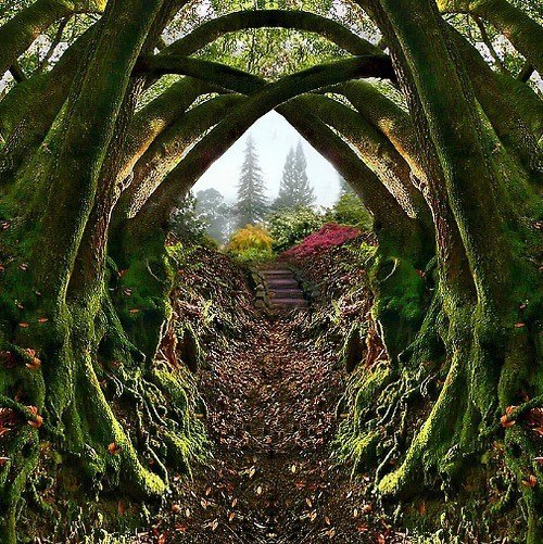 wherethehippiescometodie:  my imaginary garden path