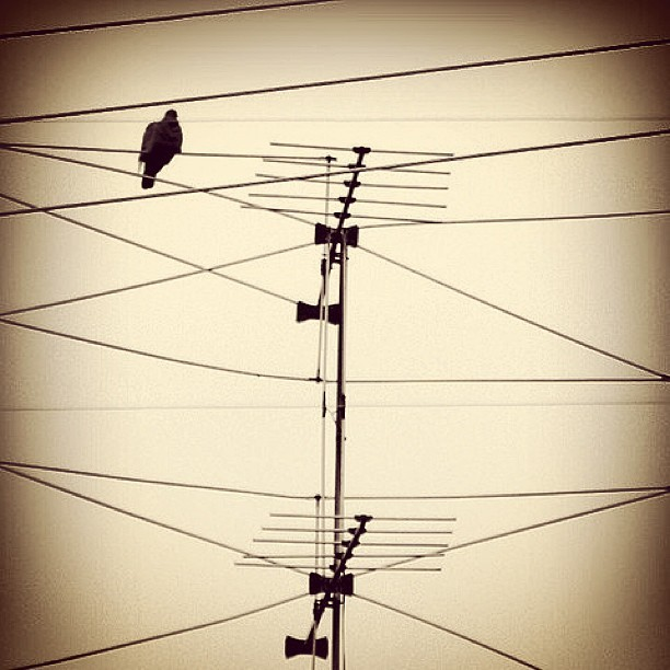#bird #pigeon #black #antenna #wire #powerline #photoart #minimal #minimalism #minimalobsession #loneliness #clld