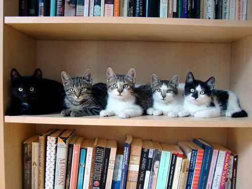 lolzpicx:  Every good book shelf needs a kitten shelf!