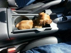 thefunniestpost:  niknak79:  Car comes with a pup holder  Hysterical!