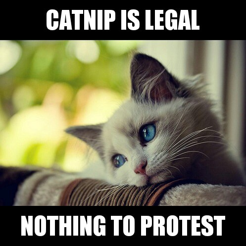First World Problems Cat doesn't feel oppressed enough.