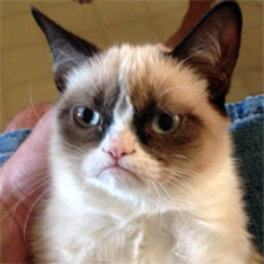 @ItsTheGrumpyCat: If I gave a shit, it would be on your face.Post from @ItsTheGrumpyCat on Twitter (via Scope)