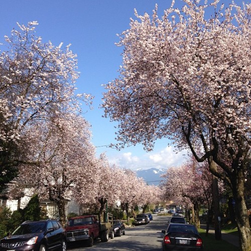 Vancity looking beautiful this spring