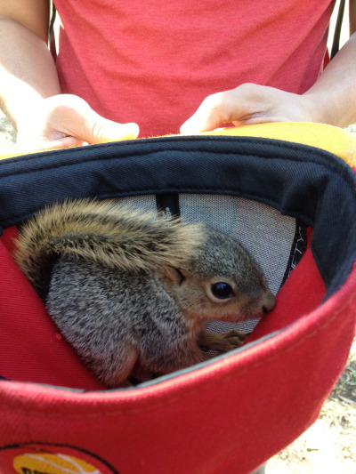 Baby squirrel brought to the Jones quad