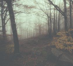 photoset popular landscape nature forest autumn mist hiking artists on tumblr photographers on tumblr lensblr original photographers