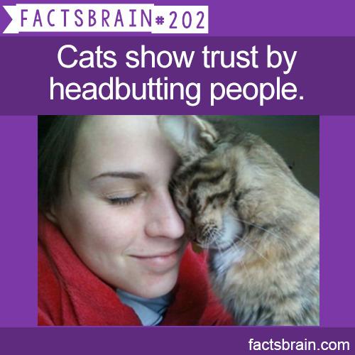 factsbrain:  Cats show trust by headbutting people.-weird,interesting&funnyfacts