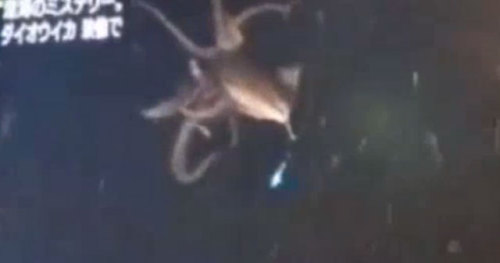 (via Elusive giant squid captured on video in the ocean deep for first time | Ars Technica)