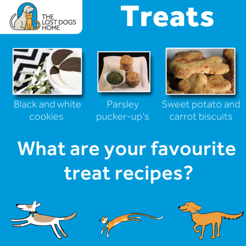 Question: What are your favourite treat recipes?   Dogs and cats absolutely love treats and there are some easy to make, healthy treat recipes out there that you can make at home!   Some of our favourites include:   Black and white cookies from Pretty Fluffy: http://prettyfluffy.com/2013/04/black-and-white-cookie-dog-treat-recipe/   Parsley pucker-up's from Dog Treat Kitchen: http://www.dogtreatkitchen.com/homemade-dog-treats-with-parsley.html   and That Dog Dancing Guy's sweet potato and carrot biscuits: http://thatdogdancingguy.com.au/2013/02/22/homemade-dog-biscuits/   Share with us your favourite homemade treat recipes!
