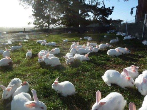 crayonguy:  Bunny master post