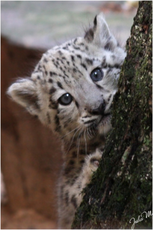 llbwwb:  Todays Cuteness:) Can you see me? by *Velvet-Paw .