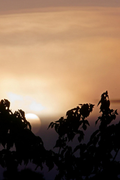 mvnchies:  sunrise 01/01/2012 by Allan Saw