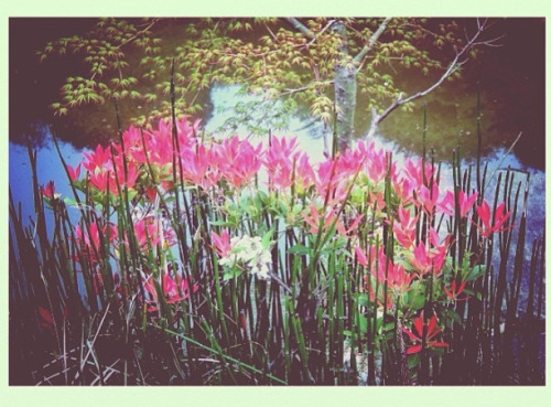 Flowers near a pond (Kamakura, Japan. Gustavo Thomas © 2011-2013) on Flickr.