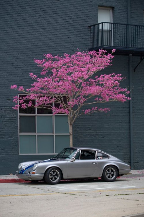 widecool:  DUTCHMAN MAURICE   911! Someday!