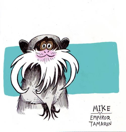 Since it's President's day, I did a drawing of an Emperor Tamarin monkey! They have the best mustaches! Happy Monkey Monday!Since it's President's day, I did a drawing of an Emperor Tamarin monkey! They have the best mustaches! Happy Monkey Monday! http://itsmonkeymonday.com/