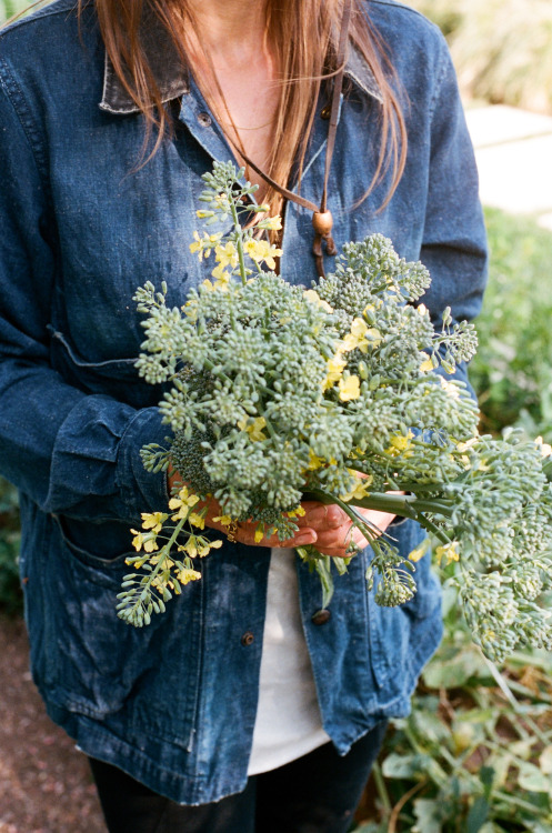 ediblegardensla:  A bouquet of broccoli. Photograph by Brian Ferry