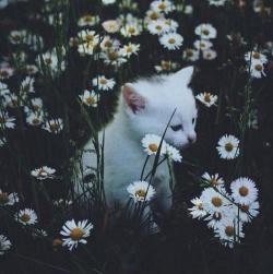 setyourpridetotheside:  cute unter We Heart It.