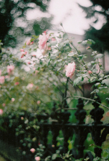 vacants:  untitled by emilyharriet on Flickr.