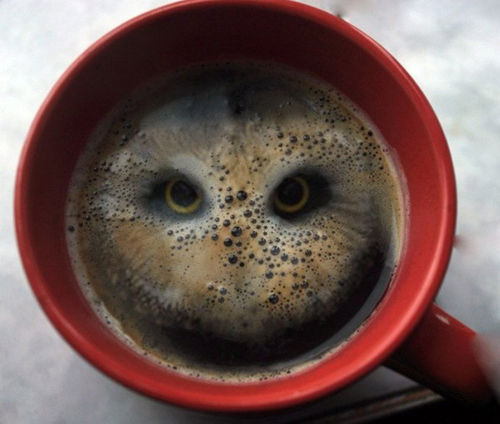 owls + coffee