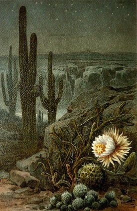 Night Blooms (Poem by Laurie Corzett)    Come, say I Enjoy the desert night blooms — rare, exquisite, alive. Quiet, the primeval cold, parched, freeze-dried. No purposeful future divined. The stories I spin … Old, alien unmarked steps upon the Earth. no meaning no warmth I walk primeval, exquisite landscape dry, old, eternal to enjoy the blooming. ****************************************************************************************************************************************** Copyright 2013 by Laurie Corzett. Image: Victorian lithograph, artist unknown.