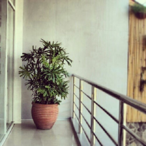 #plants#nature#relaxing#fresh#pot#terrace#fresh#place#green#shoutout#photography#instagreat#instagood#instapic#like#railings#tour#philippines#house#cebu