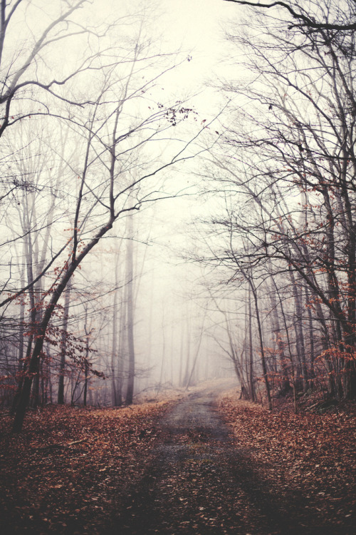 villere:  Foggy Path (by Kyle D Adams)