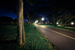 Lit path in the park (by 63n1)