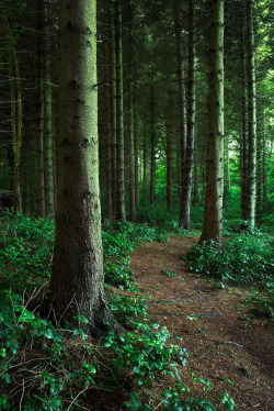 lori-rocks: Woodland Walks, Rhodes Minnis, England, By Mike Robinson