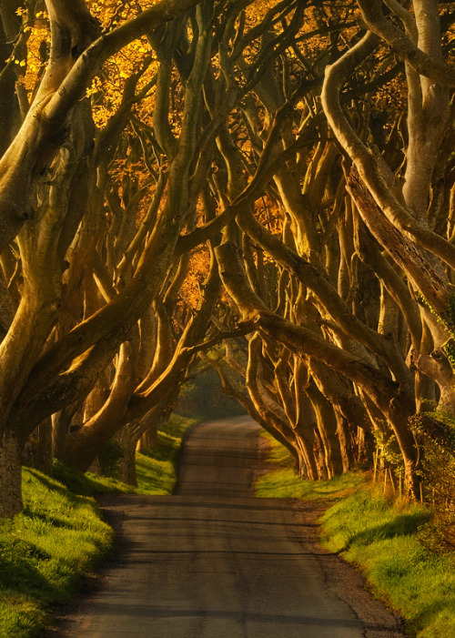 The Dark Hedges, Northern Ireland photo via besttravelphotos