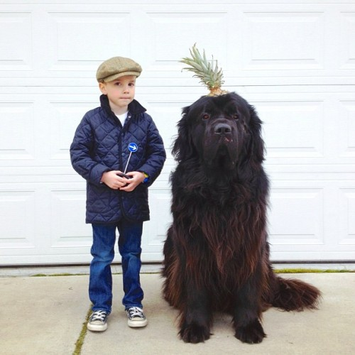 petapeta:  Interview with the Mother of the Little Boy and His Huge Dog - My Modern Metropolis