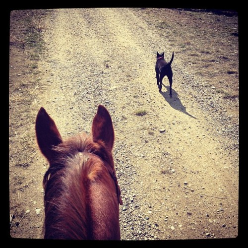 Today is a good day #happy #riding #horse #dog