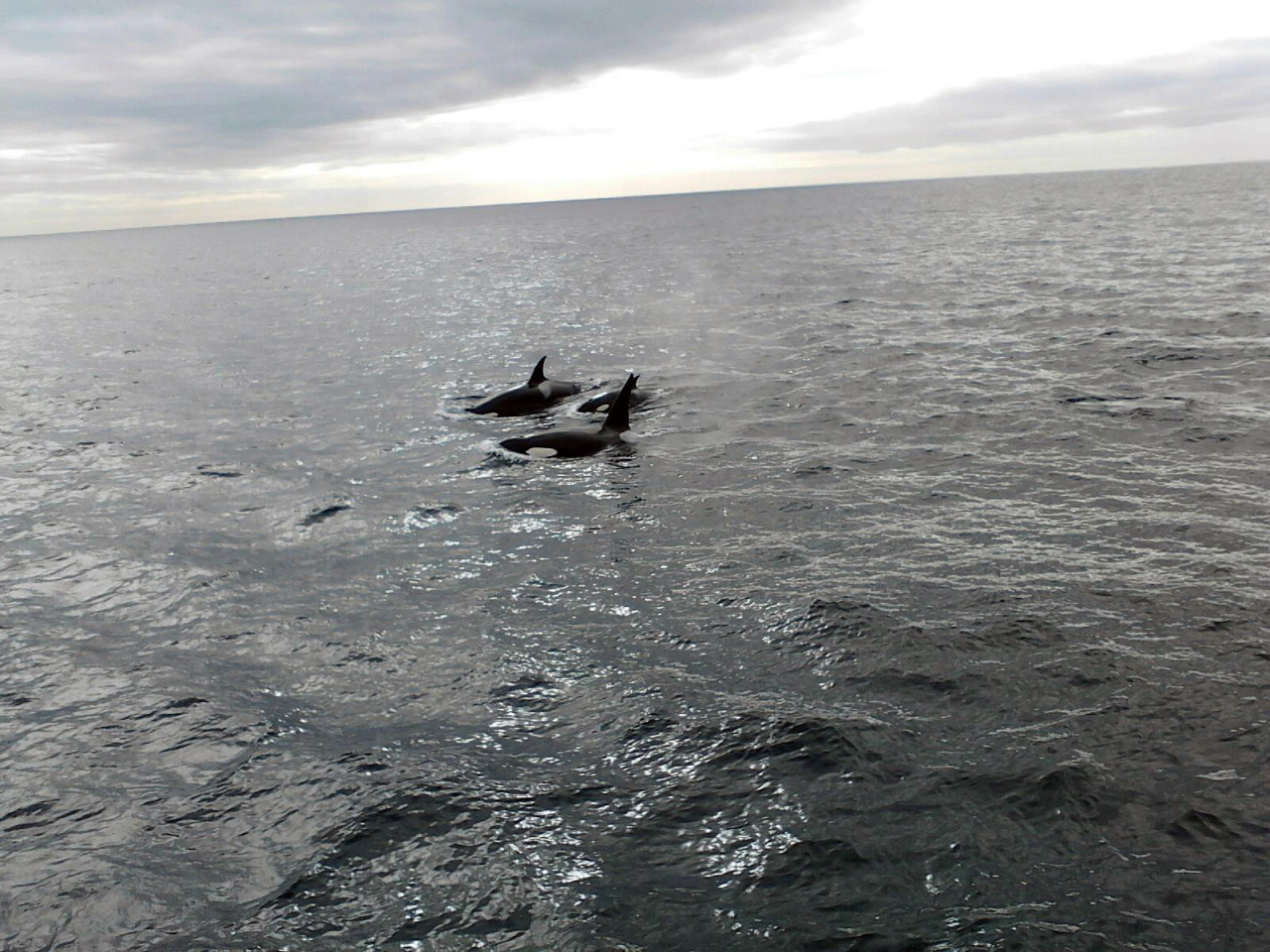My friend Robert saw this Orca pod near Anacapa Island today.