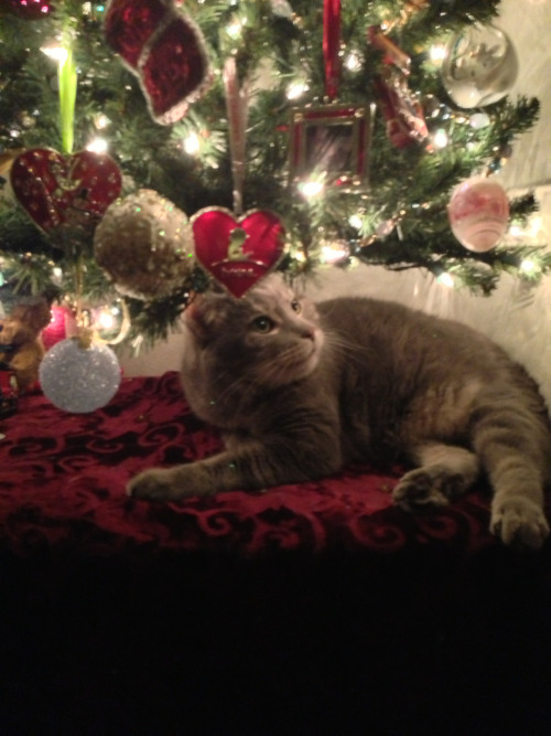 Merry Christmas to you & yours! From me, my hubby, & my kitty Orion!