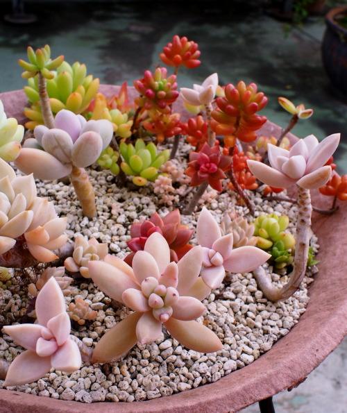 markunsan-succulents