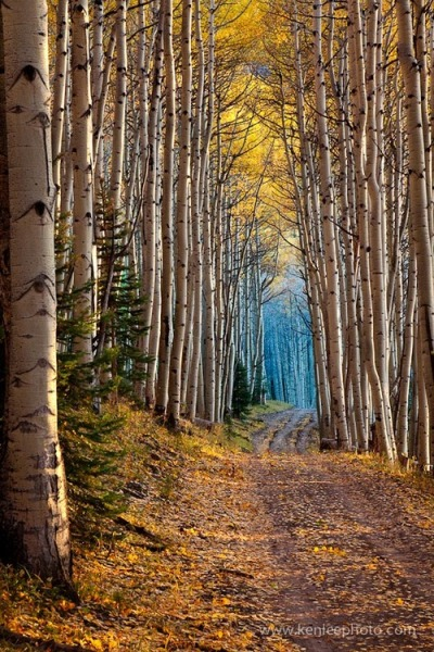 ssiduri:  Aspen cathedral by K. Lee.