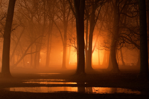 darkface:  January Fog (by ~EvidencE~)