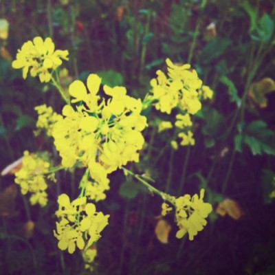 #flowers on the #hike #trail #hiking #yellow #bright #spring #nature #outside #outdoors #exercising #exercise #fun #notalotofflowers #pretty #beauty  (at Hellman Trail)