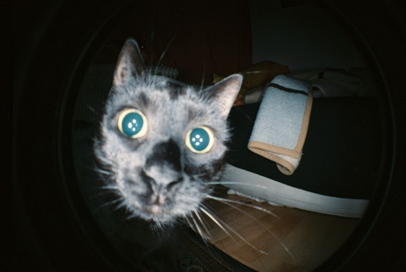 """Ohai! Whatcha eating??"" Photo via Lomography"