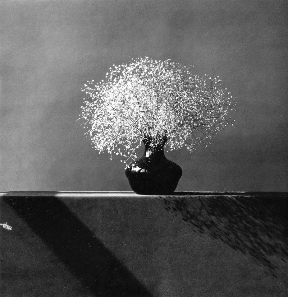 planisfeer:  Robert Mapplethorpe - Baby's Breath (1987)