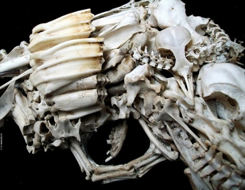 Model gun made from animal bones.