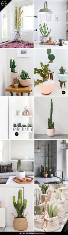 cacti cactus succulents home inspo