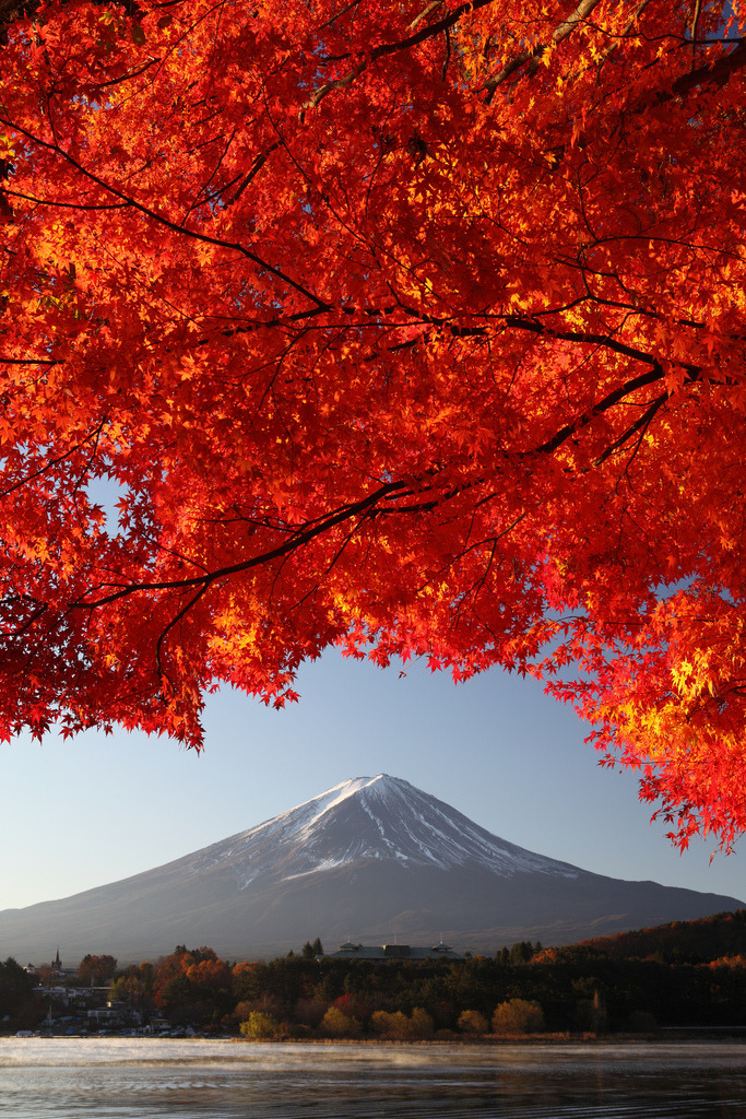 ethereo:  Mt. Fuji and Maple (vertical shot) (IMG_1765_DPP_resized) (by Fumitaket)   Fuji