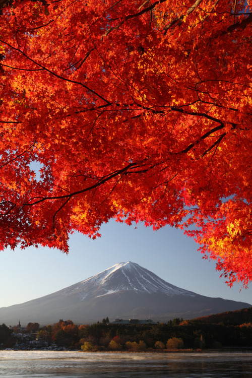 ethereo:  Mt. Fuji and Maple (vertical shot) (IMG_1765_DPP_resized) (by Fumitaket)
