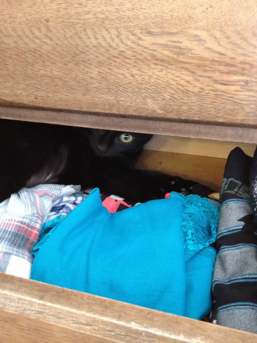 get out of there cat. you cannot wear my clothes nor is that a good place to hide.